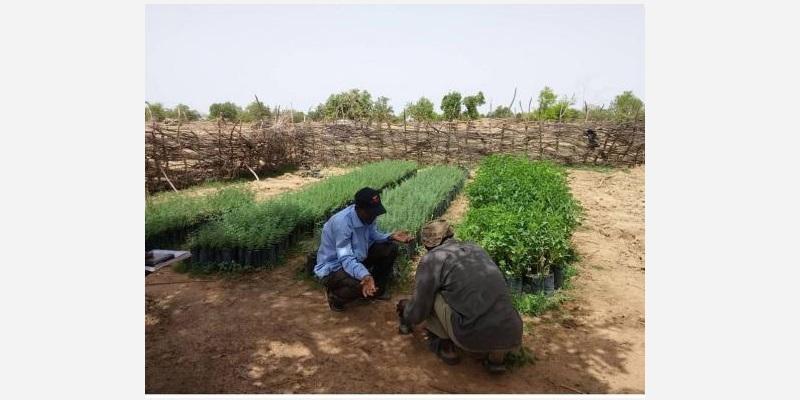 Pépinière au Burkina Faso chargée de la reforestation © APEFE