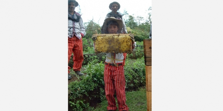Au Guatemala, la coopérative Guayab regroupe des producteurs de miel (c) Miel Maya