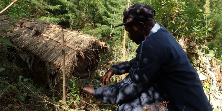 Ruche traditionnelle au Congo RDC - Sud-Kivu (c) Miel Maya