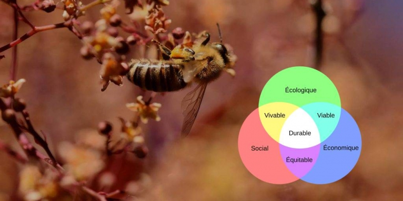 Webinaire « L'apiculture durable, au Nord et au Sud » | © Miel Maya Honing asbl