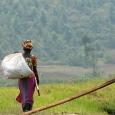 Rwanda © Dominique Pirnay - Woush - cliquer pour agrandir