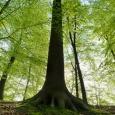 Appel à projets de la Campagne de volontariat pour le patrimoine mondial 2020 - cliquer pour agrandir